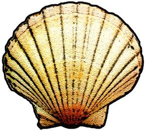 Shellistry
